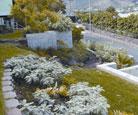 inset-nursery-plant1