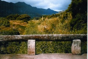 Waimanalo Stream Before