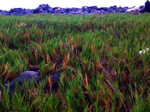 'Aki'aki fields forever.......