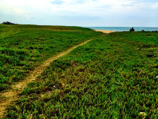Trail in 'aki'aki field