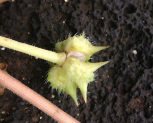 nohu seed web