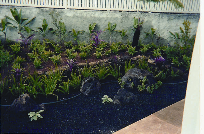 Close up of area taken right after plants were installed....15 years ago!