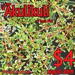 PlantoftheMonth_Akulikuli_2015