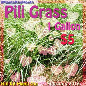 Pili Grass 2.16